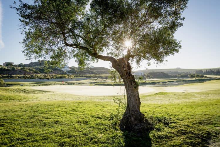 Montecastillo Barcelo Golf Course